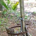 Leaky Barrel by Gordon Elwell