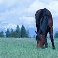 Leaning Horse by Eleszabeth McNeel