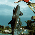 Leaping Dolphins At Hawks Cay by Carl Purcell