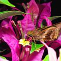 Least Skipper Butterfly by Thomas R Fletcher