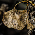 Leaves 4 by Christy Garavetto