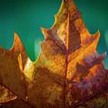 Leaves 971 by Sandy Adams