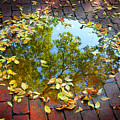 Leaves And A Puddle by Jeremy Lewis