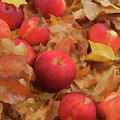 Leaves And Apples by Michael Flood