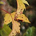Leaves And Autumn by Joan  Minchak
