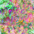 Leaves And Colors by Juana Maria Garcia-Domenech