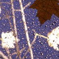 Leaves And Rain 2 by Tim Allen