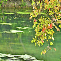 Leaves And Water by Gary Richards