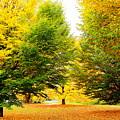Leaves by Bijna Balan