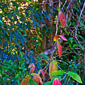 Leaves Changing Color As Autumn Approaches In Iguazu Falls National Park-argentina   by Ruth Hager