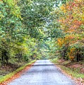 Leaves Changing In The Fall Near Collierville,tn by Billy Morris