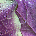 Leaves, Color,  And Dew by Paula Joy Welter
