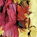 Leaves Fall by Ann Hughes