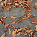 Leaves by Gale Cochran-Smith