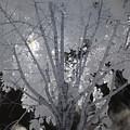 Leaves Hiding The Sun by Don Zawadiwsky