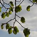 Leaves by Hitesh Patel
