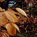 Leaves In Late Autumn by Elizabeth Tillar