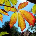 Leaves In Sunlight 4 by Angelika Heidemann
