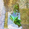 Leaves In Water by Tony Rubino
