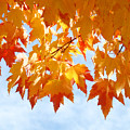 Leaves Nature Art Orange Autumn Tree Leaves by Baslee Troutman
