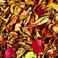 Leaves Of Autumn by David Wimsatt