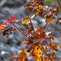 Leaves Of Fall  by Stefan Pettersson