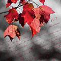 Leaves Of Red by Cathy Kovarik