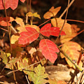 Leaves Of Three by Art Block Collections