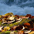 Leaves On Rock By River by Ed Mosier