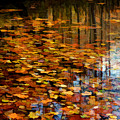 Leaves On Water 2 by Sam Davis Johnson