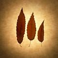 Leaves by Tony Cordoza