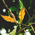 Leaves  by Totto Ponce