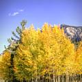 Lee Canyon Aspen by Robert Melvin