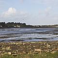 Lelant Water Hayle Estuary by Terri Waters