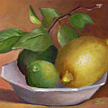 Lemon And Limes Still Life by Joni Dipirro