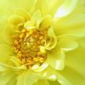 Lemon Dream by Lori Pessin Lafargue
