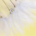 Lemon Drop by Amy Tyler