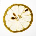 Lemon Slice by Alexander Fedin