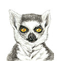 Lemur by Katerina Kirilova
