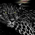 Leopard At Night by Keith Furness
