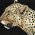 Leopard by Charlotte Yealey