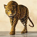 Leopard by Daniel Eskridge