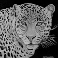 Leopard by George Sonner