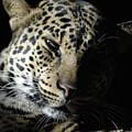Leopard II by Keith Lovejoy