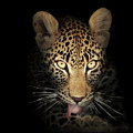 leopard in the dark by Johan Swanepoel