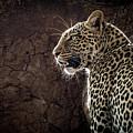 Leopard by Patti Schulze
