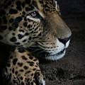 Leopard Print by Athena Mckinzie