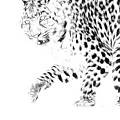 Leopard Spots Black And White by Steve McKinzie