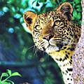 Leopard by Zia Low