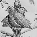 Les Trois Oiseaux by Catherine Sprague